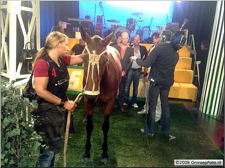 Doos 143 Foto 2845. Paard in de Gang bij HollandSport