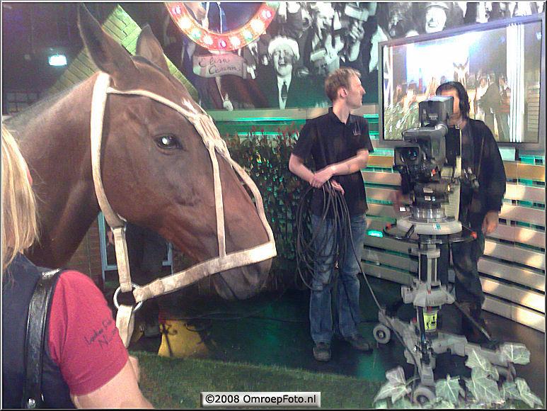 Doos 143 Foto 2846. Paard in de Gang bij HollandSport